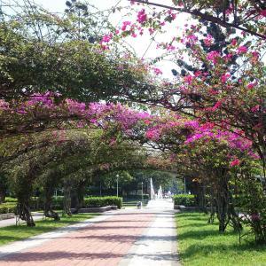 台湾『栄星花園(公園)』は蛍、バードウォッチングができます!