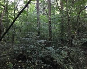 追分の森を行く