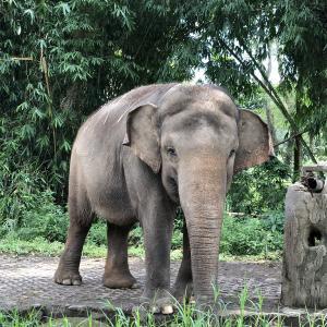 自然豊かな癒しスポット!ボゴールへ週末旅行② 〜Taman Safari観光〜