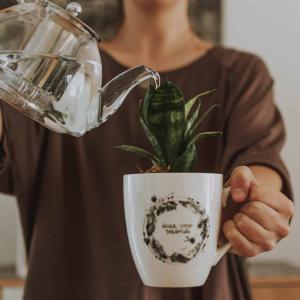 植物の水やりを忘れがちな人に朗報!!スマホの水やり管理アプリが秀逸