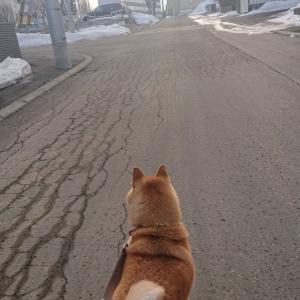 引っ越し後の散歩