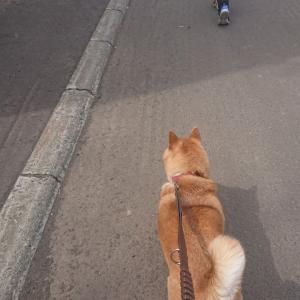 平成最後の日でも散歩はします!