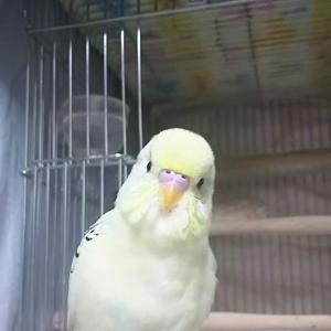 笑いが絶えない我が家の放鳥🐤
