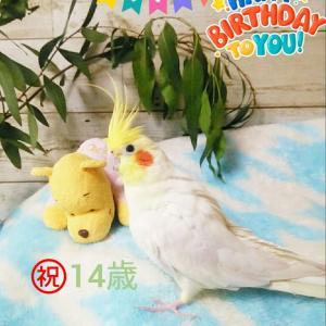㊗️むっちゃん14歳のお誕生日🎉