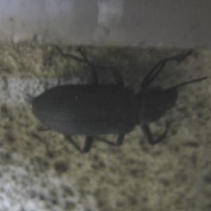 『団地の窓辺に来ていた甲虫』(200917)