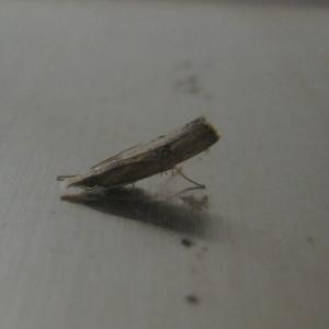 『トイレで暮らす蛾の姿』(200922)