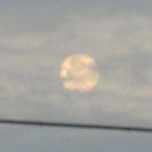 『このごろは月がいいのだった』(210922)