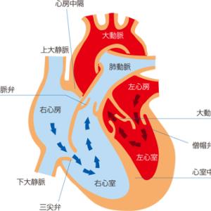 大動脈解離・心臓弁膜症をまとめてみた!