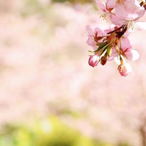 一足早い、春を満喫