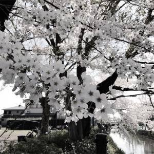 栃木市 「うずまの鯉のぼり」を見てきました。
