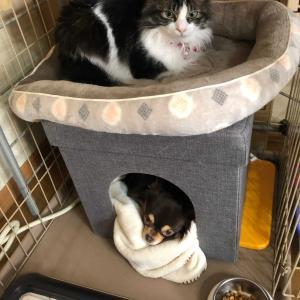 マーブルと保護猫みるく
