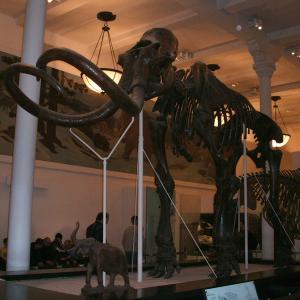 アメリカ自然史博物館 (American Museum of Natural History)