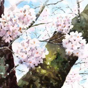桜アップで