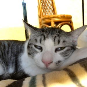 効果的な昼寝の方法。それと日曜の夜は瞑想の時間です。