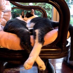 保護猫活動から思うお手伝いはお互いさまのコミュニケーション