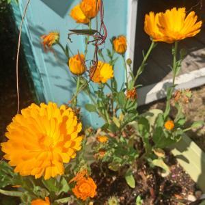 花の種も蒔き方で発芽が変わるんだね〜あなたは過程と結果どちらが欲しい?