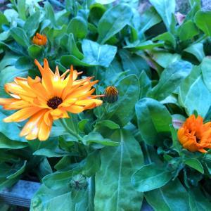 厳しい世の中だけど壁を乗り越えるために小さな花を咲かせ続けよう