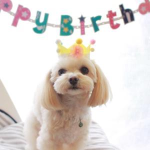 もも3歳おめでとう!