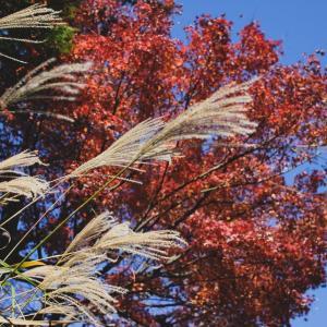 アレルギーと季節:10月のアレルギー