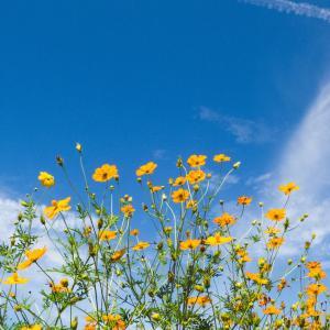 アレルギーと季節:秋のアレルゲンについて