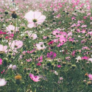 アレルギーと季節:9月のアレルギー