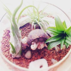 アレルギーと観葉植物:観葉植物で気を付けるべきこと。アレルギーでも植物を楽しみたい。