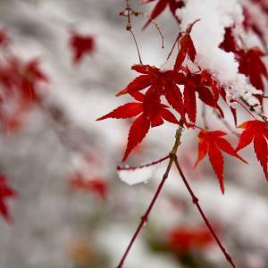 アレルギーと季節:冬に起こりやすいアレルギー