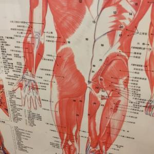 【練習日記】210902 トムソンベッドで骨盤矯正 カイロプラクティック