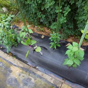 ミニミニ菜園