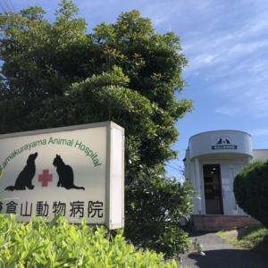 鎌倉山動物病院 診察の結果は自己免疫性ブドウ膜炎