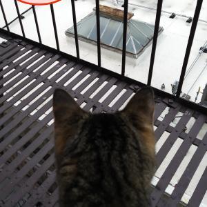夏のはずなのに気温は14度 / カモメに興奮する猫