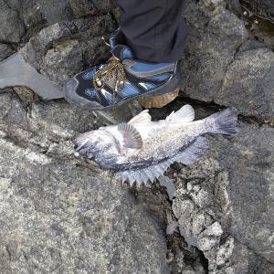 沼前岬にショアブリ単独釣行してきました(2020年6月)