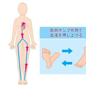 寝る時に着圧ソックス履くときの注意点【血流改善には逆効果かも】