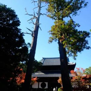 宝福寺の紅葉 紅葉