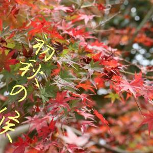 愛犬と秋のプチハイキング(^_-)-☆