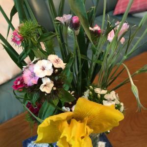 今週のお花〜♪   農家さんの庭の花?  でも安いので嬉しいよ
