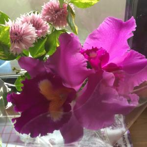 お家に花を飾ろう!花農家さんに貢献して、自分も楽しむ日々