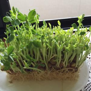 観葉植物が置けない家!  田舎育ちと都会育ちの生態