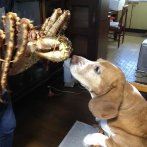 1282;犬の手も借りたい