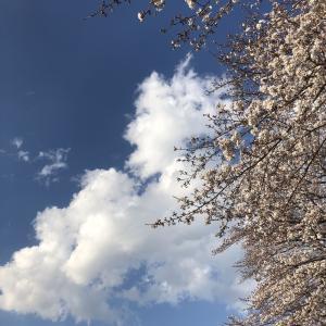 桜咲き誇る日のAmazon事件