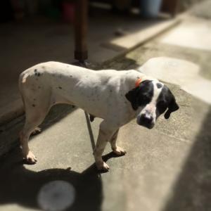 【2018年5月7日】箕面自由学園近く、迷子の別犬