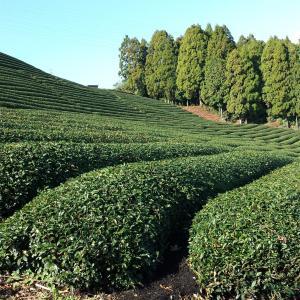 営農型(地域活用要件)は地目が判定される