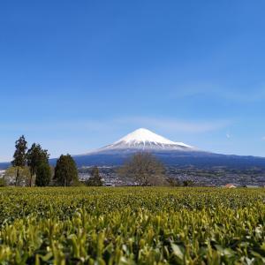 お茶処の静岡、鹿児島に抜かれる