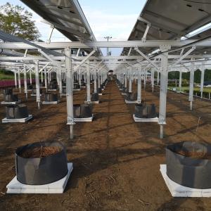 営農型太陽光シャインマスカット完成