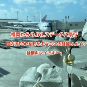 【国内JALステータス修行に思う】やはり羽田ー沖縄の往復はきつかった|福岡からの国内JAL修行路線