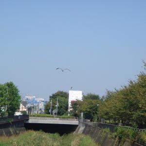 散歩風景&富士山