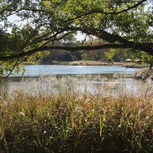 昭和記念公園(水鳥の池、ダリアなど)