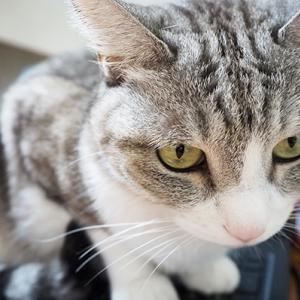 猫が退いてくれない時の対処法が効かないとき