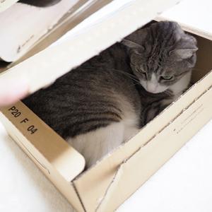 箱の中身はなんじゃらほい