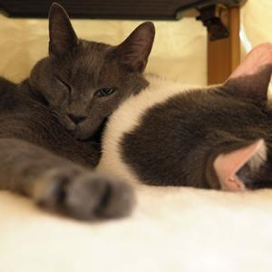 猫ちゅ~たらコタツだよね。